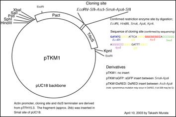 qiagen plasmid plus midi kit manual