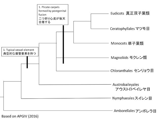 被子植物の進化