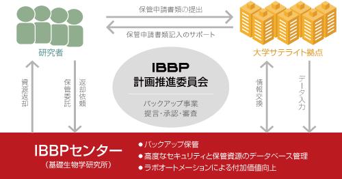 IBBPとは