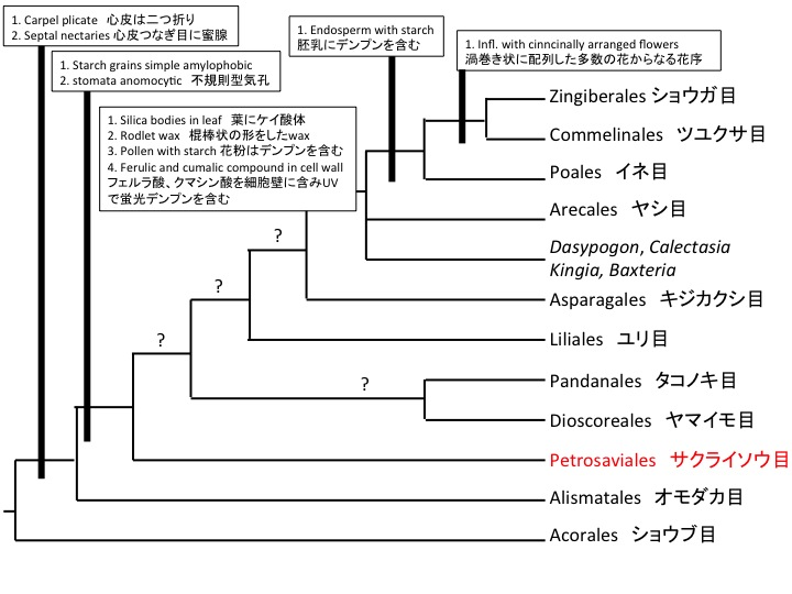 Protosabiales