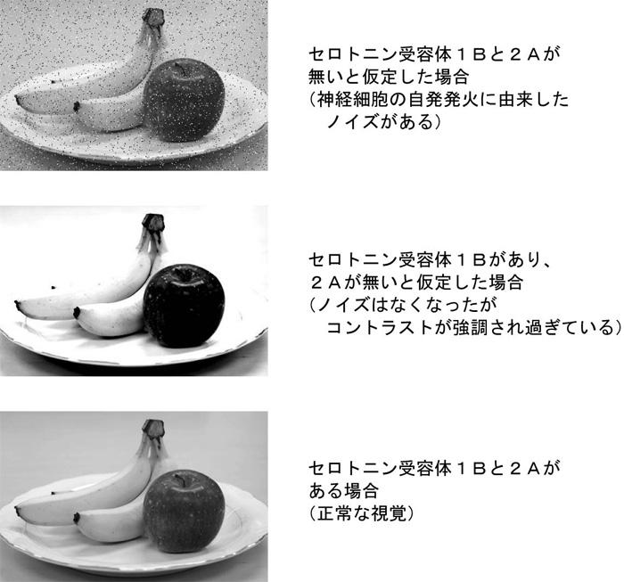 0811212-fig3_s.jpeg