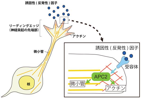 fig2_web.jpg