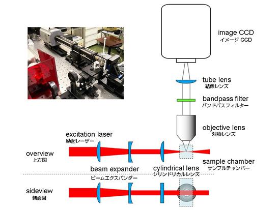Fig1-s.jpg