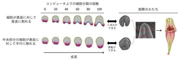fig5.jpg