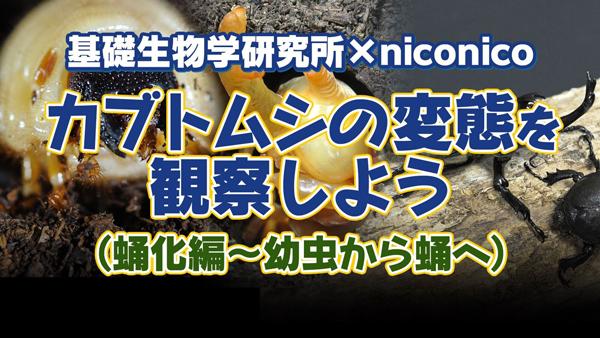 niconico.jpg