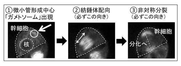 fig1.jpg