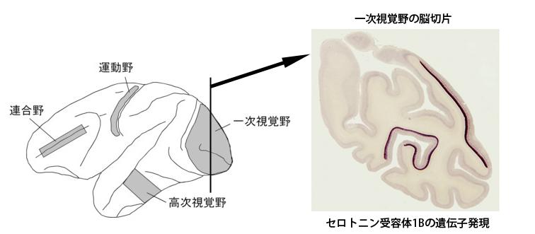 fig1.jpeg
