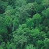 ボルネオ島中央カリマンタンの調査(2004年12月-2005年1月)