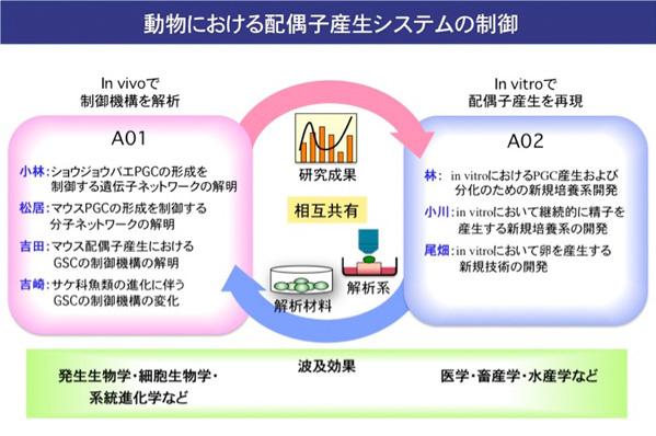 配偶子産生制御_organization