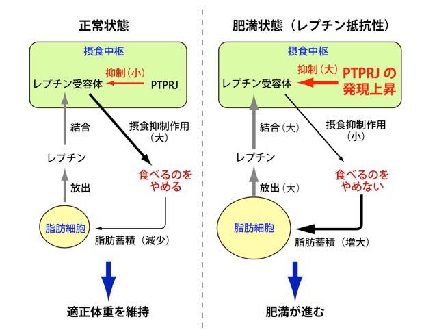 fig0.jpg