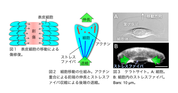 fig1-3.jpg