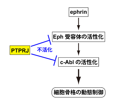 fig.jpg