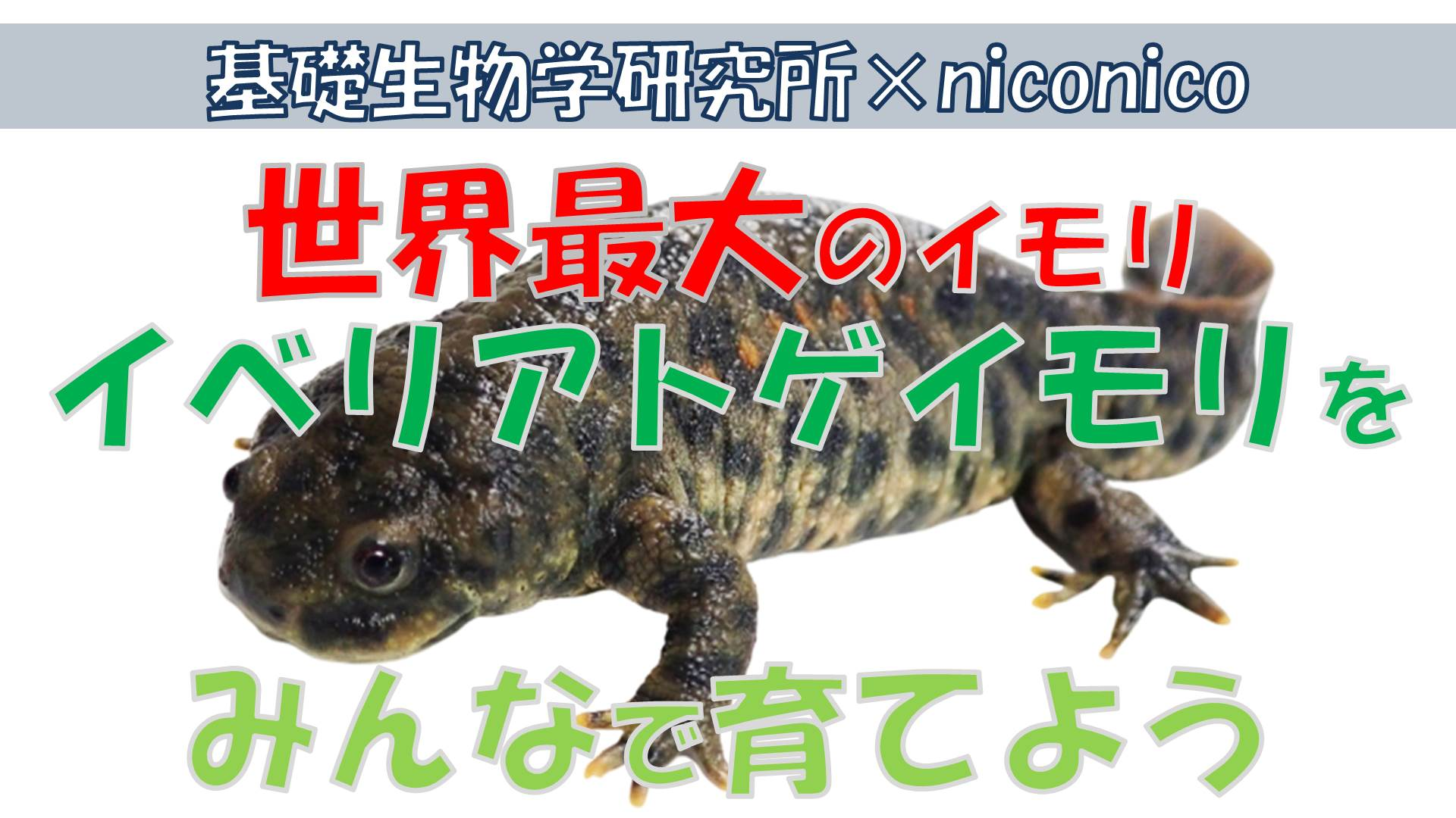 imori_niconico.jpg