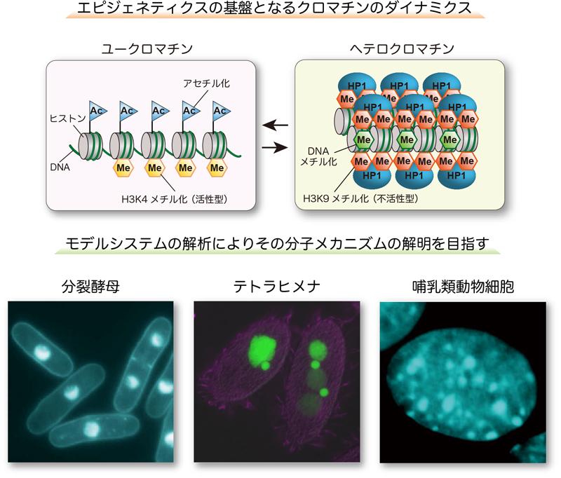2020_nakayama_main_visual.jpg