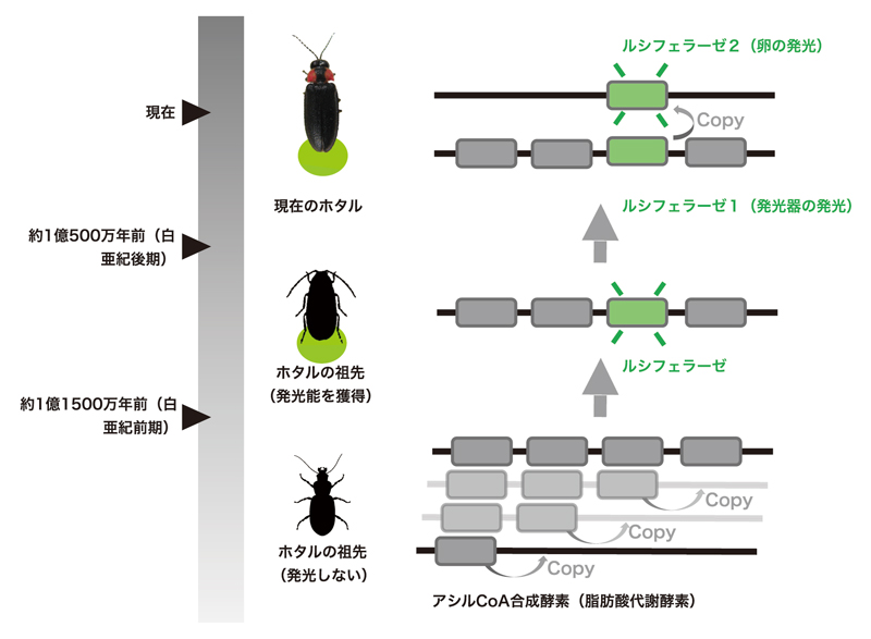 2020_shigenobu_fig2.jpg