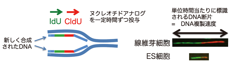 2020_tsubouchi_fig1.jpg