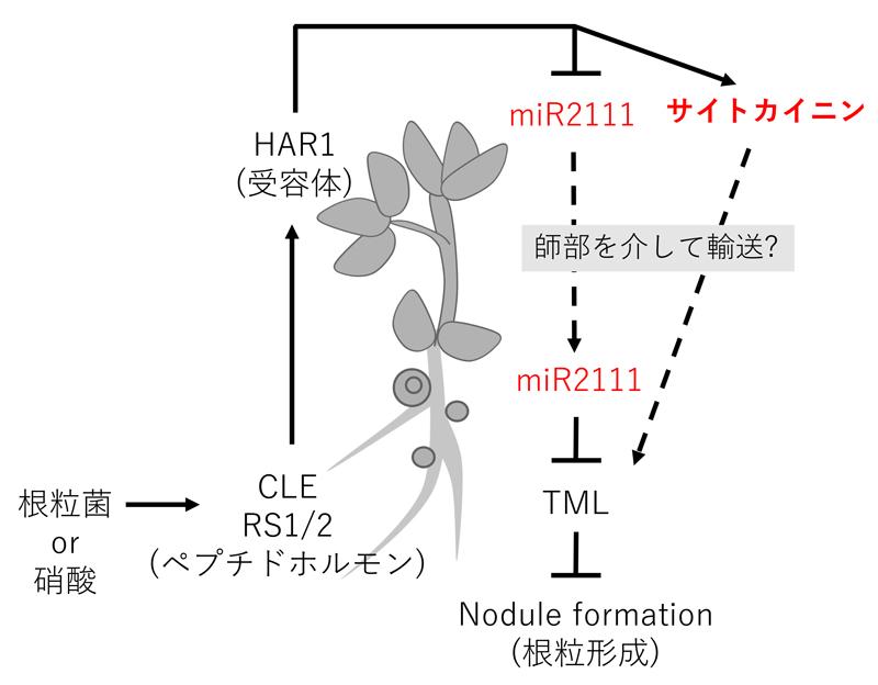 2021_kawaguchi_fig2.jpg